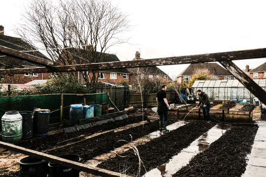 Old_Hall_Allotments_3.jpg